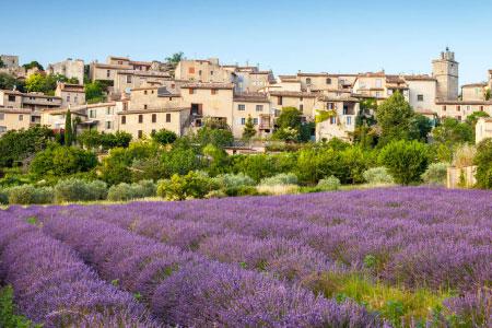 champ de lavande Provence