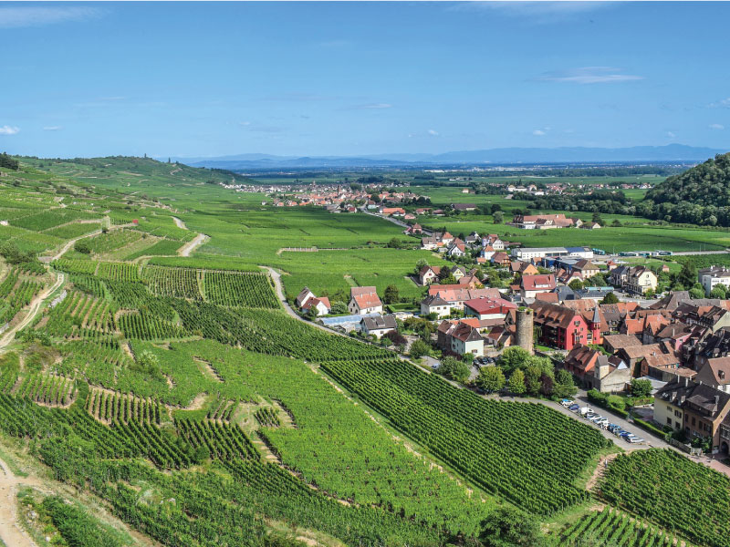 paysages viticoles d'Alsace